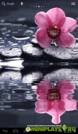 Живые обои Орхидея над водой