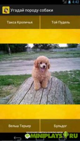 Угадай породу собаки